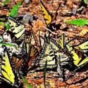 A Kaleidoscope Of Butterflies Poster