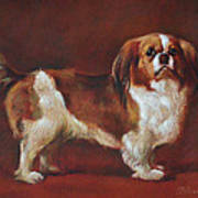 A King Charles Spaniel Poster