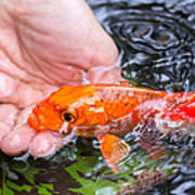 A Koi In The Hand Poster