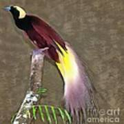 A Large Bird Of Paradise Poster