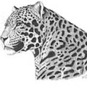 A Leopard's Watchful Eye Poster