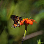 A Monarch Butterfly 3 Poster