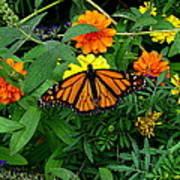 A Monarchs Colors Poster