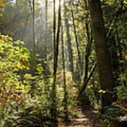 A Narrow Trail Poster