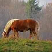 A November Horse Poster
