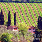 A Painting Tuscan Vineyard Poster
