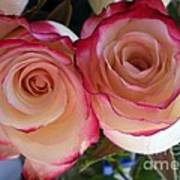 A Pair Of Roses  Poster