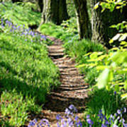 A Path Through An English Bluebell Wood In Early Spring Poster