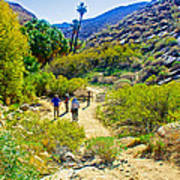 A Pause On Lower Palm Canyon Trail In Indian Canyons Near Palm Springs-california Poster