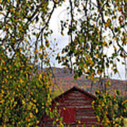 A Peak Of Fall Red Barn Poster