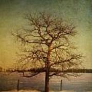 A Pictorialist Photograph Of A Lone Poster by Roberta Murray