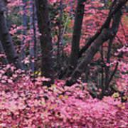 A Pink Autumn  Poster
