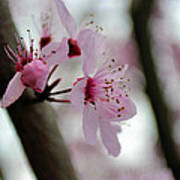 A Pink Flowering Tree Flower Poster