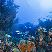 A Quiet Underwater Day Poster