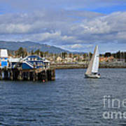 A Sailing Yacht Passes The Wharf In Sidney Harbour Poster