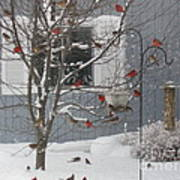 A Sea Of Cardinals At The Feeder Poster