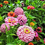A Sea Of Zinnias 08 Poster