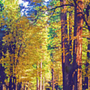 A Shady Drive Through Yosemite Poster