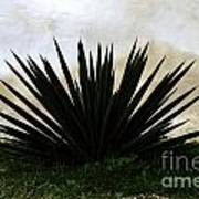 A Simple Yucca Poster