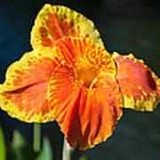 A Single Orange Lily Poster