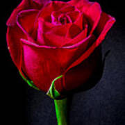 A Single Red Rose Poster