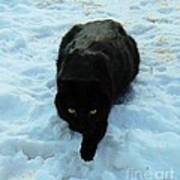 A Small Panther In The Snow Poster by Cheryl Poland