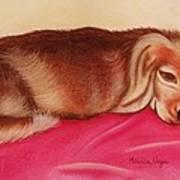 A Spaniel's Nap Poster