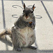 A Squirrel Known As Chippy Poster