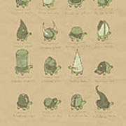 A Study Of Turtles Poster