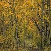 A Teton Autumn Poster
