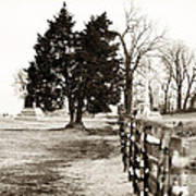 A Tree Grows In Gettysburg Poster