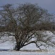A Tree In Canaan 2 Poster