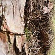 A Treetrunk Abstract Poster