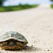 A Turtle On A Texas Farm Road Poster