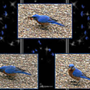 A Typical Eastern Bluebird's Lunch - Featured In Comfortable Art Group Poster