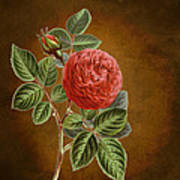 A Vintage Rose Romance L Poster