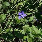 A Violet Poster