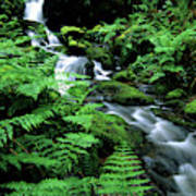 A Waterfall In Redwood National Park Poster