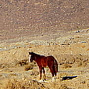 A Young Mustang Poster