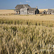 Abandoned Farmhouse In Wheat Field Poster
