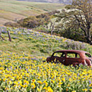 Abandoned Ford Buried In Wildflowers Poster