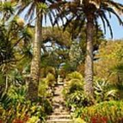 Abbey Gardens Of Tresco On The Isles Of Scilly Poster
