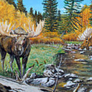 Above The Lake ..moose Poster