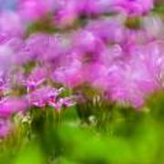 abstract Blurry pink flower background for backgrounds Poster