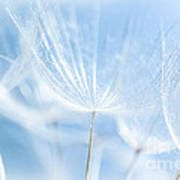 Abstract Dandelion Background Poster
