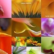 Abstract Fine Art Flower Photography Poster by Juergen Roth