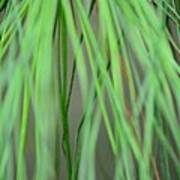 Abstract Green Pine Poster