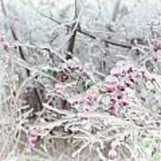 Abstract Ice Covered Shrubs Poster