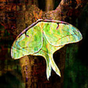 Abstract Luna Moth Painterly Poster