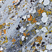 Abstract Orange Lichen 2 Poster